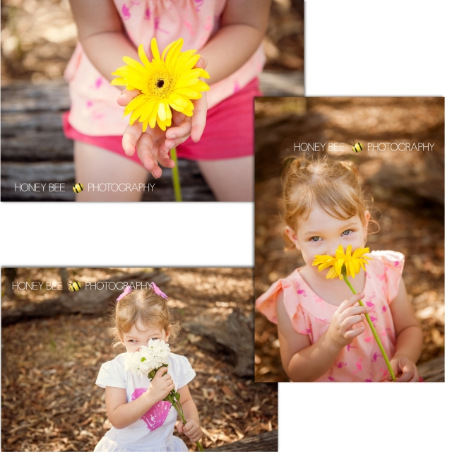 Brisbane Family | Children | Newborn | Maternity | Wedding Photography | Gerbra | Flower | White & Yellow Flowers | On Location | Golden Hour